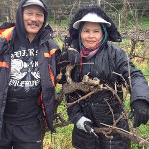 Hand pruning of vineyards