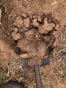 Soil No Cover