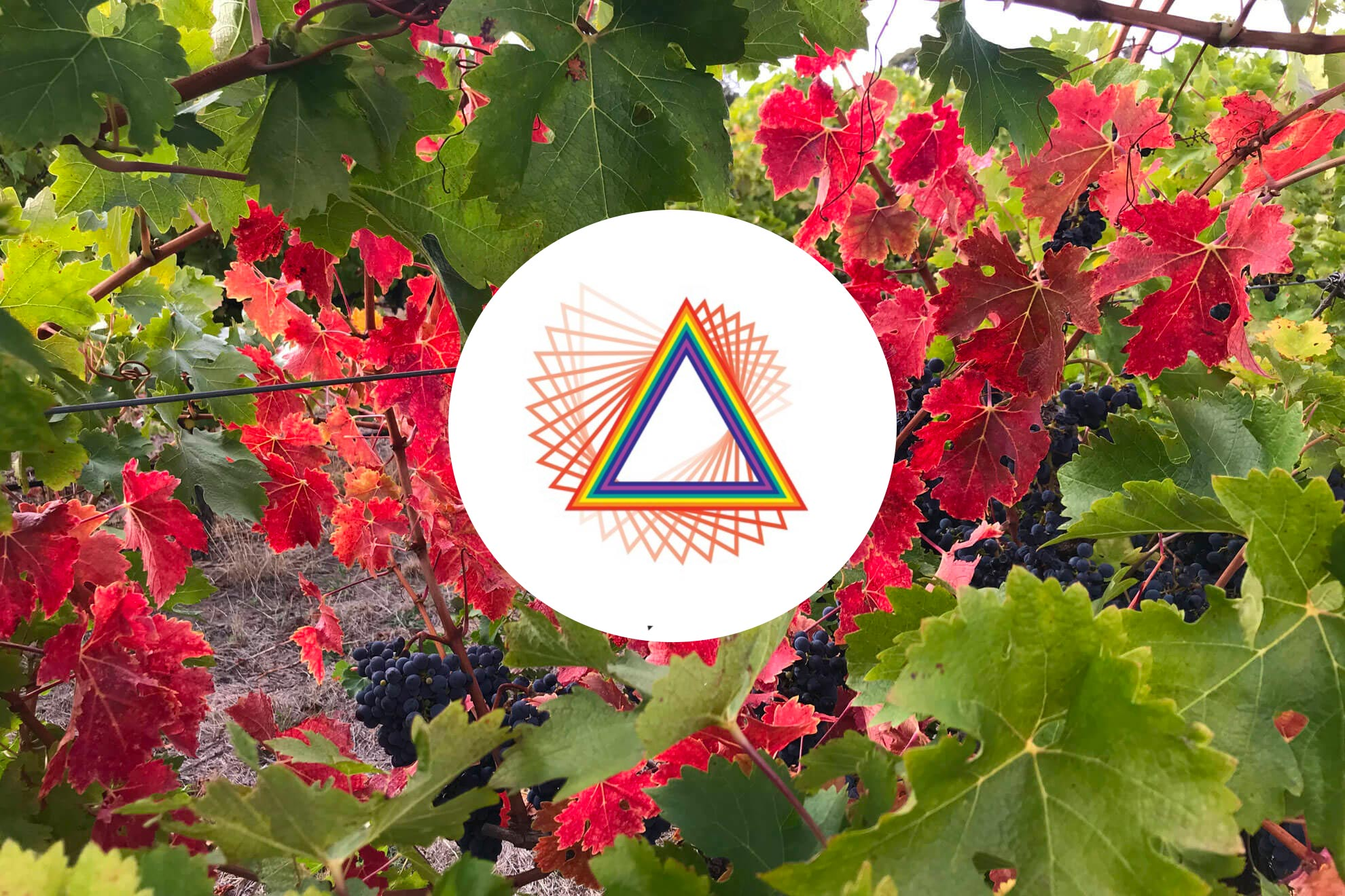 What does the logo standard for Pridham Viticulture
